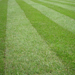 Playing Field Grass Cutting in Hertfordshire, Essex, Bedfordshire, London, Buckinghamshire & Northampton